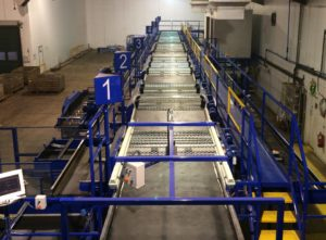 Vegetable Grading Line | Tong Engineering