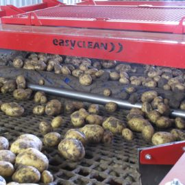 Efficient Vegetable Processing In Challenging Conditions