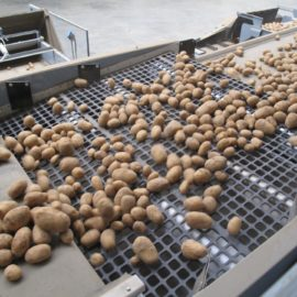 Potato Sizing | 8 Ways to Reduce Damage & Maximise Value