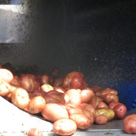 TPS-PRO – Vegetable Polisher