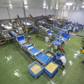 Tong installs five-line potato peeling solution for Yorkshire processor