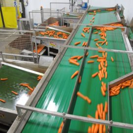 Carrot Sizing & Handling