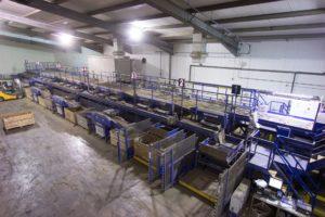 Potato Grading & Handling Line - Tong Engineering
