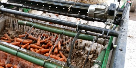 Carrot Washing & Sizing Line from Tong
