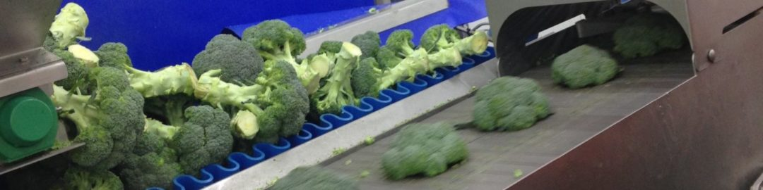 BROCCOLI TRIMMING