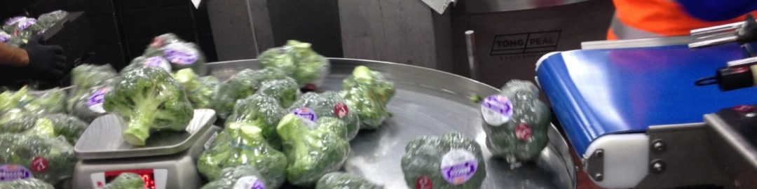 BROCCOLI PACKING LINES