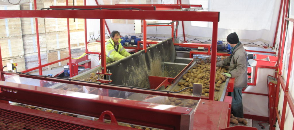 Potato Grading Inspection Caretaker Grader from Tong (1)