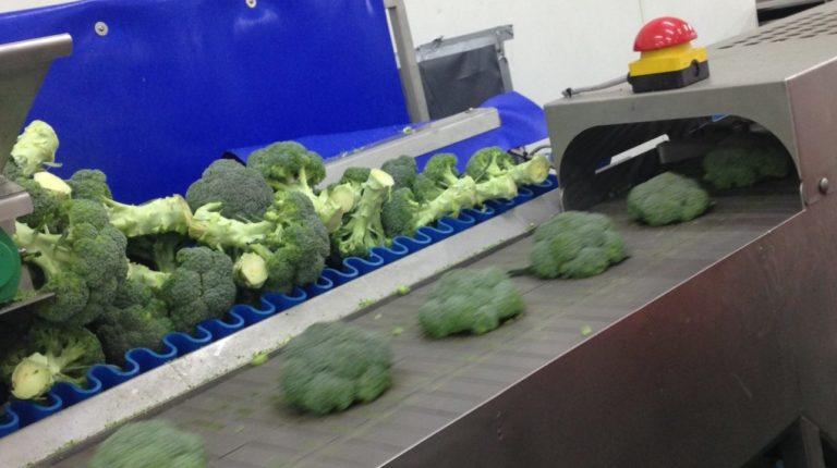 Broccoli Trimming & Cutting