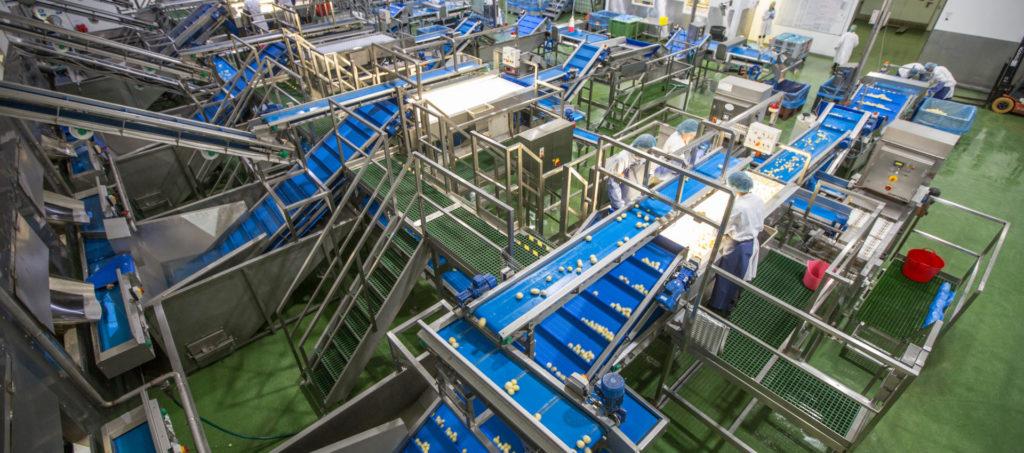Potato Processing Washing Peeling Lines Tong Engineering (3)