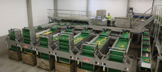 Potato Box Filling with Single Vertical Box Fillers from Tong