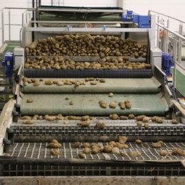 Potato Sizing & Handling