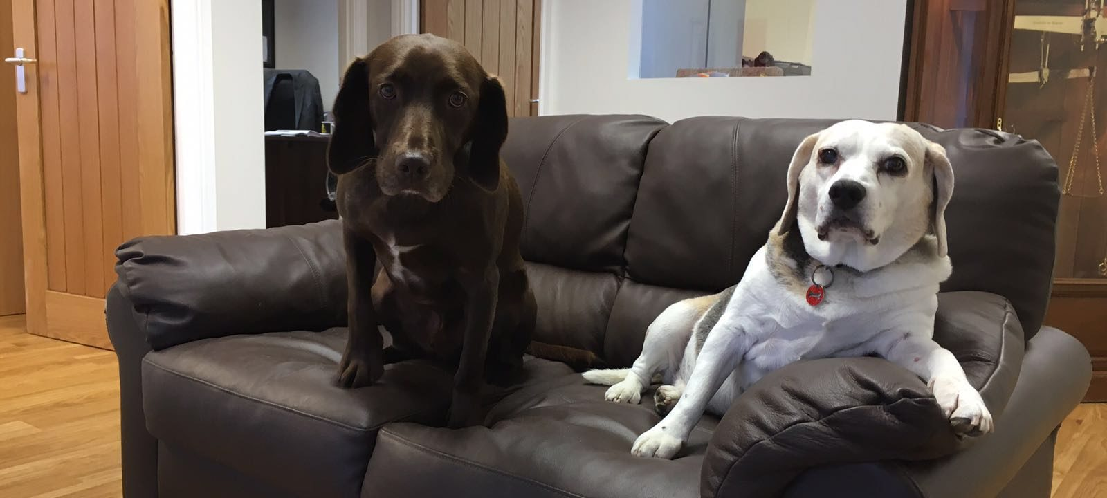 Snoopy Tong Office Dog Beagle (9)