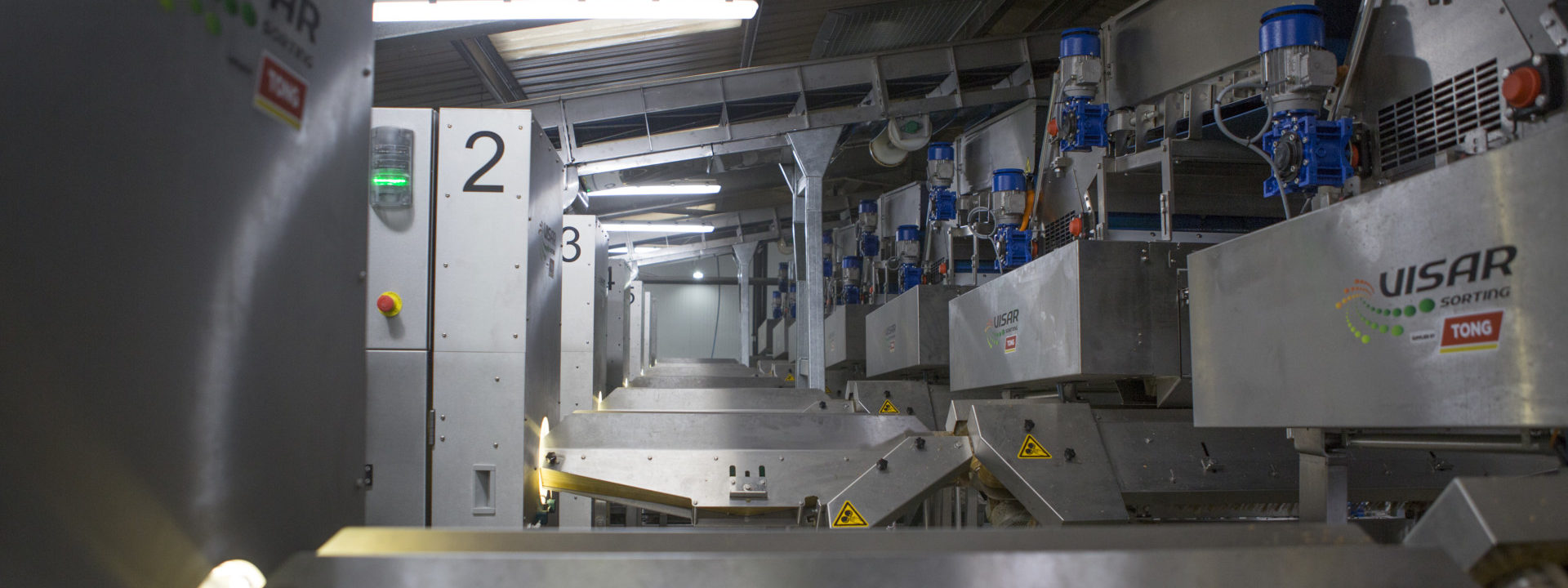 tong-visar-carrot-optical-sorting-grading-line-1