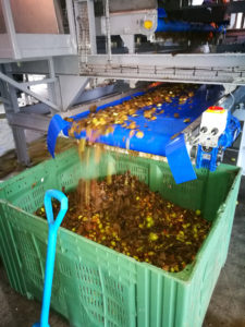 Cider-Apple-Handling-euqipment-apple-cleaning-loading-destoning-machines-Tong-Engineerin