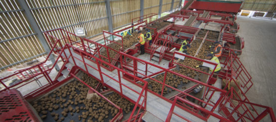 Potato Sizing, Cleaning and Bulker loading line
