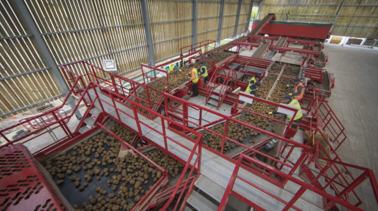 Potato Sizing, Dirt Eliminating and Bulker loading line