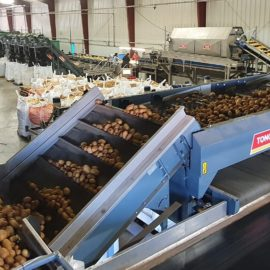 Leading US potato processor chooses Tong for advanced grading and washing